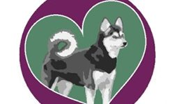 Learn more about the Alaskan Klee Kai National Rescue