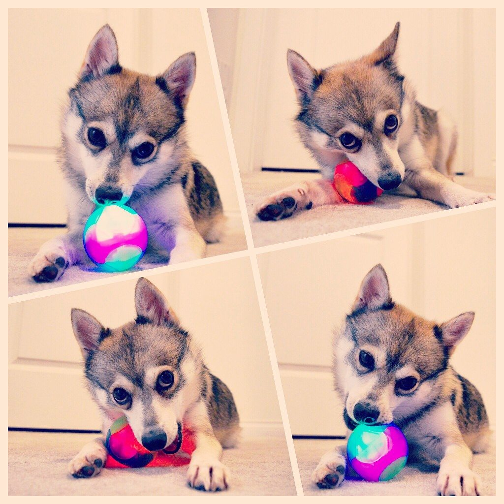 Kobi playing with his new ball