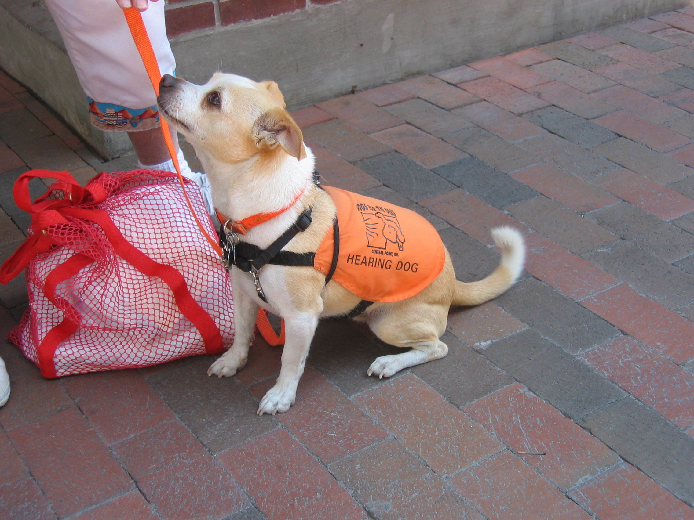 Become Certified Service Dog Trainer