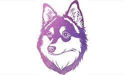 How about an Alaskan Klee Kai T-shirt?