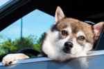 10 Tips for Traveling With Your Dog in a Car