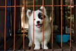 Indestructible dog crates- our top 5 picks