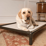 kuranda-pvc-chewproof-dog-bed